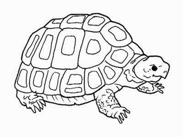 I rettili for Piccole tartarughe di terra