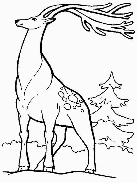 Animali di montagna for Piccoli disegni di baite di montagna
